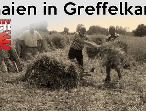 Maaien in Greffelkamp